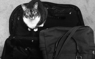 Tips for Traveling with Pets From the Founder of Petfinder.com