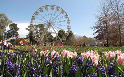 Fabulous Flower Festivals for Spring