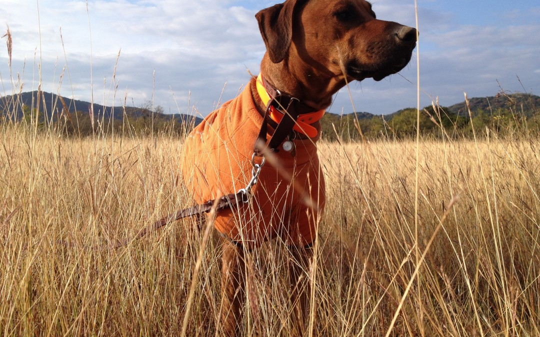 Pet Health: Hiking Safely With Your Dog